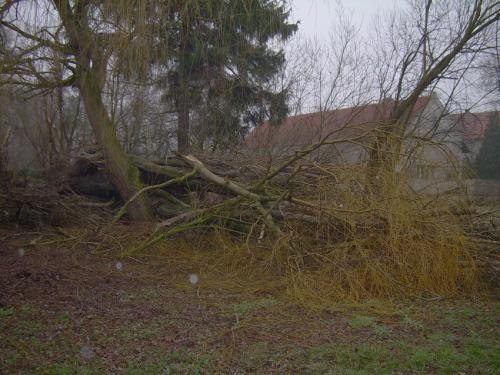 Následky orkánu Kyrill 2007