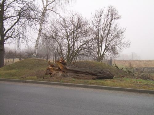 Zlomený strom uhlavní silnice